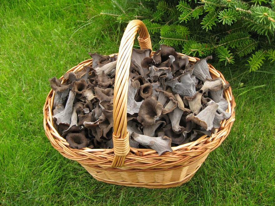 Sbírat houby