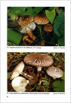 Interesting macromycetes found in the Czech and Slovak Republics - ANTONIN V. - SKUBLA P.