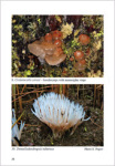 V. F. Malysheva-Rare and interesting species of heterobasidiomycetes from Russia